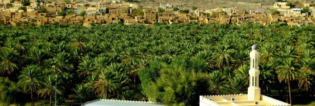 آمار تولید و مقدار زمین های نخل خرما در عمان